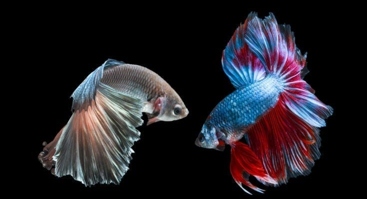 symbolic meanings of fish
