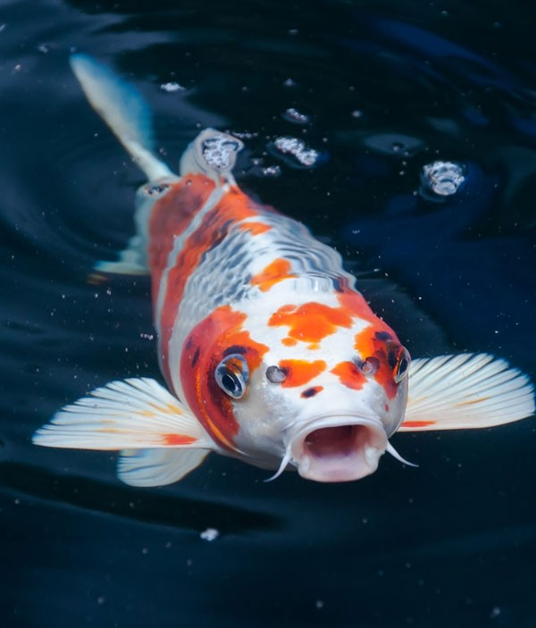 smymbolic meanings of fish