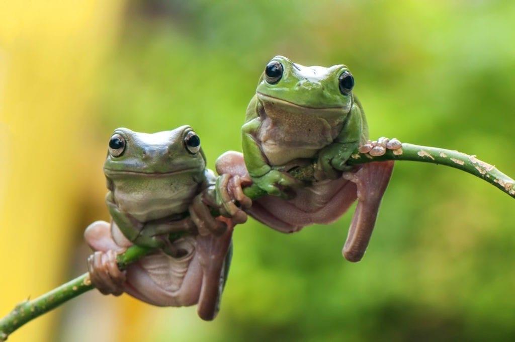 Frog Meaning frog symbolism