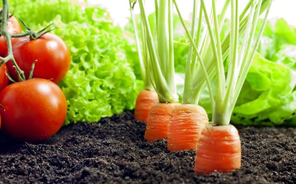 Vegetable garden meaning