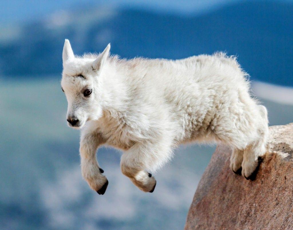 symbolic goat meaning