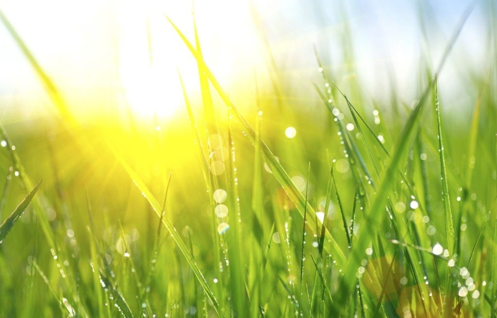 symbolic meaning of grass