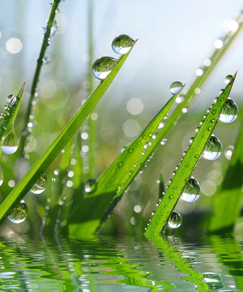 meaning of grass