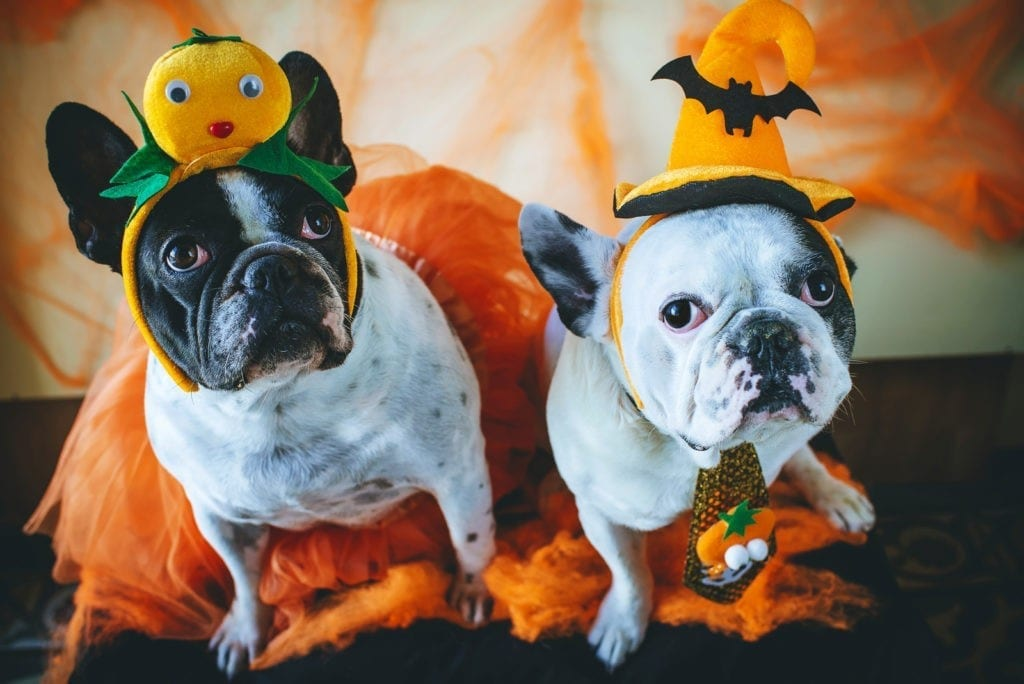 symbolic meaning of halloween and meaning of mumming