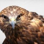 symbolic hawk meaning