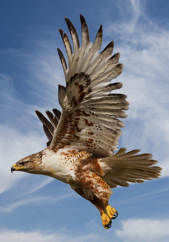 symbolic hawk meaning
