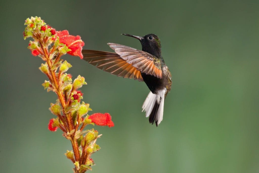 symbolic hummingbird facts and meaning