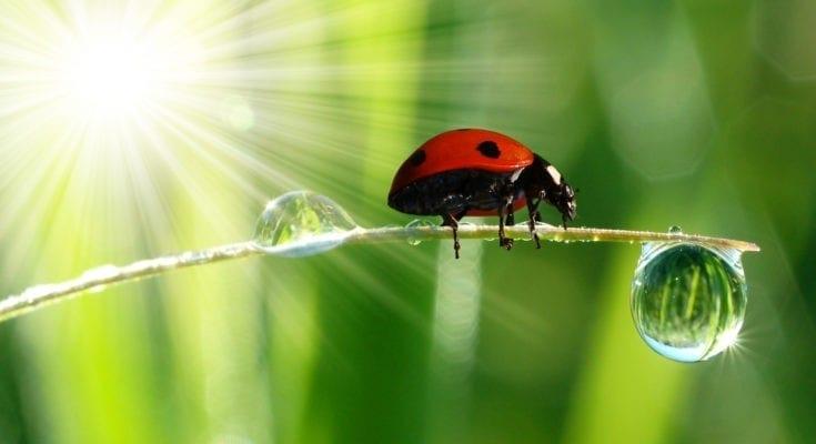 ladybug tattoo ideas
