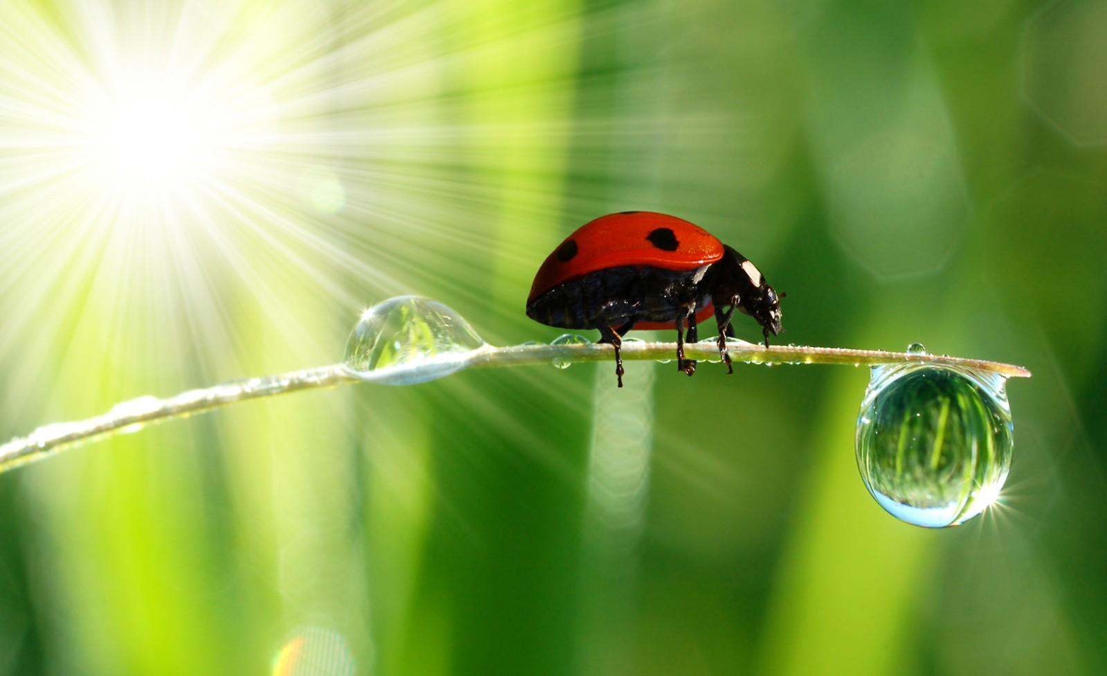 Symbolic Ladybug Tattoo Ideas