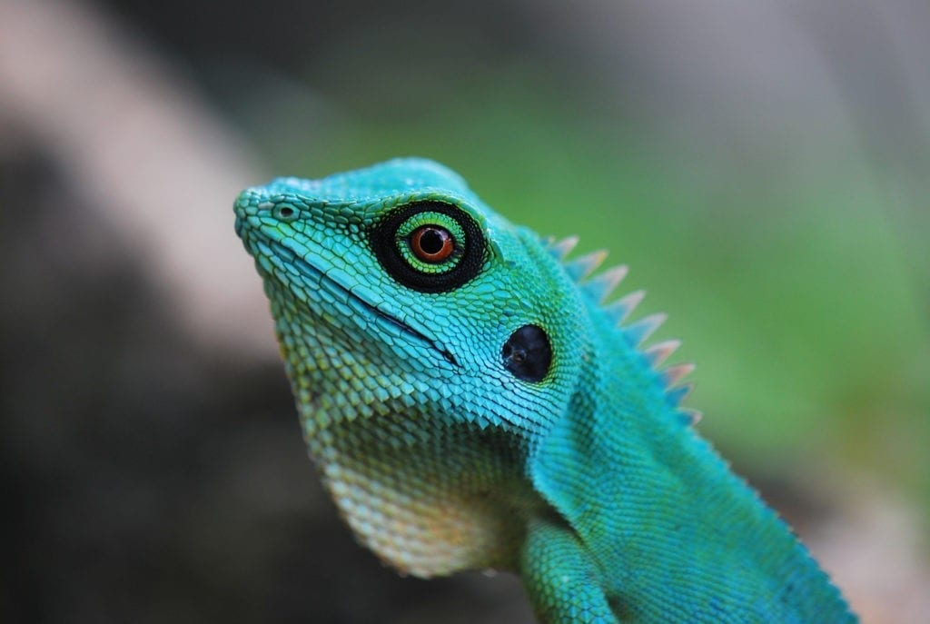 symbolic meaning of lizards