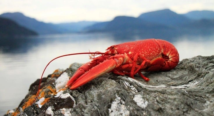 symbolic lobster meaning