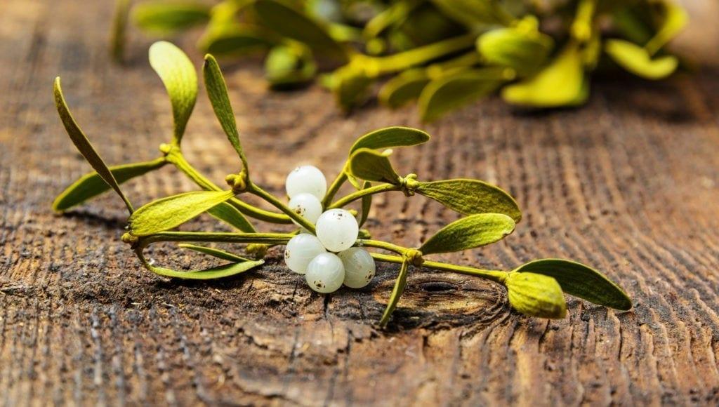 symbolic mistletoe meaning christmas decorations