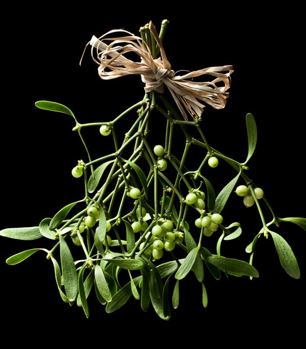 mistletoe meaning and christmas decoration