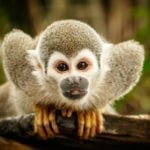 symbolic monkey meaning