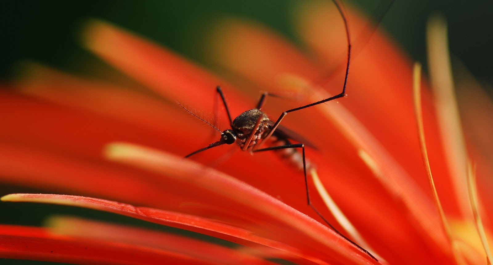 symbolic mosquito meaning