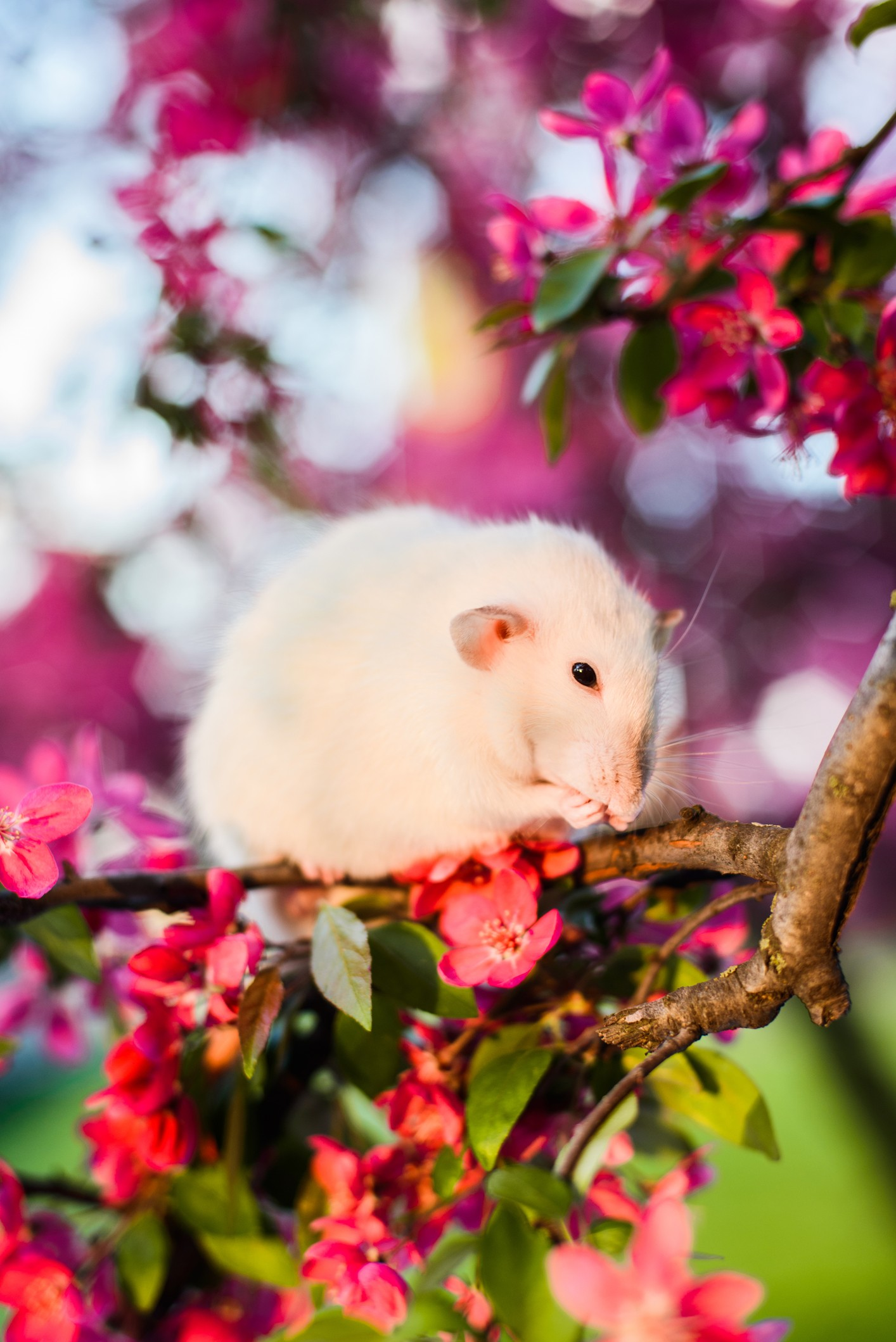 Symbolic Meaning Of Rats Whats Your Sign