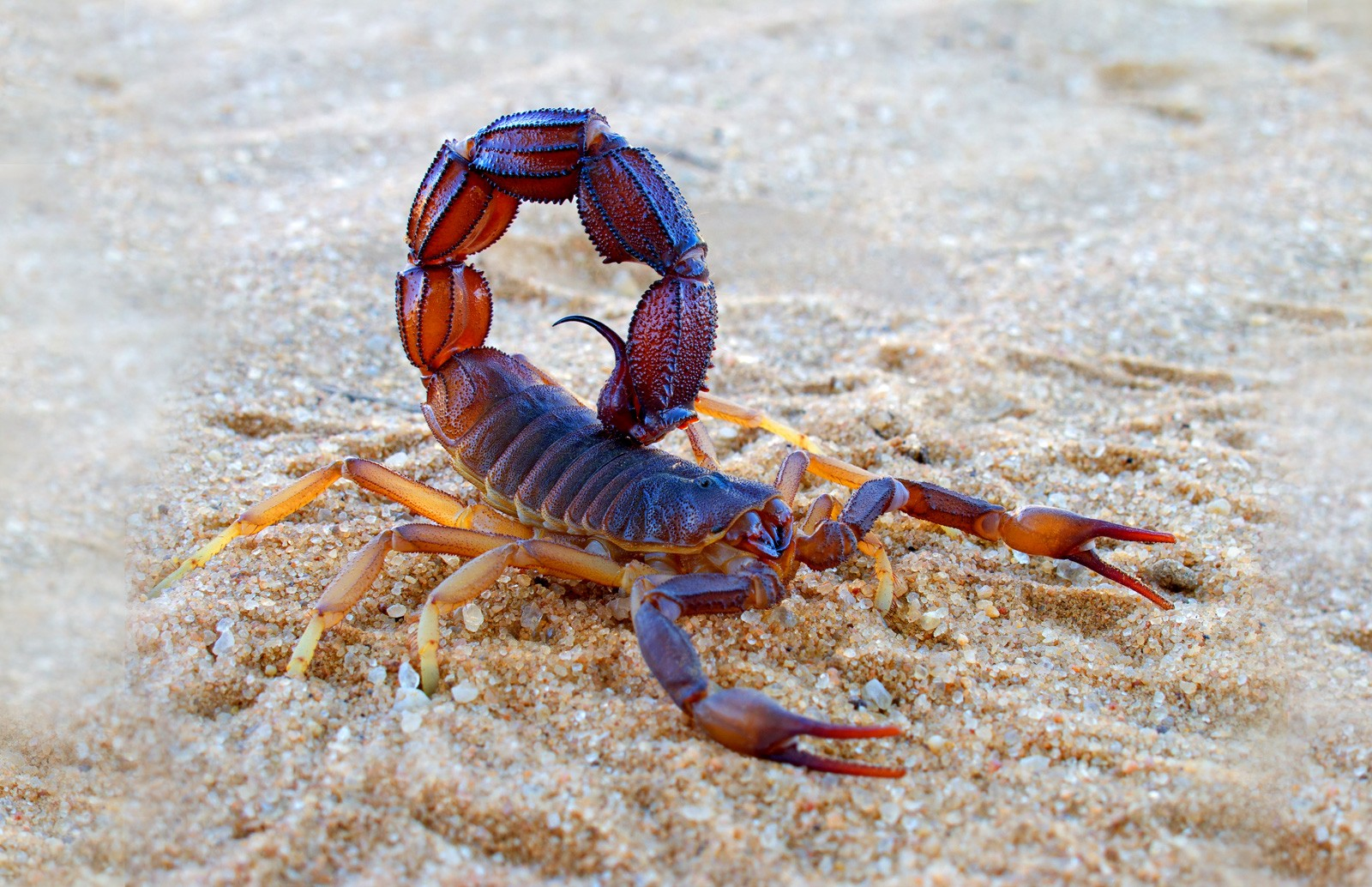 Symbolic Meaning Of Scorpion And Scorpion Totem On Whats Your Sign
