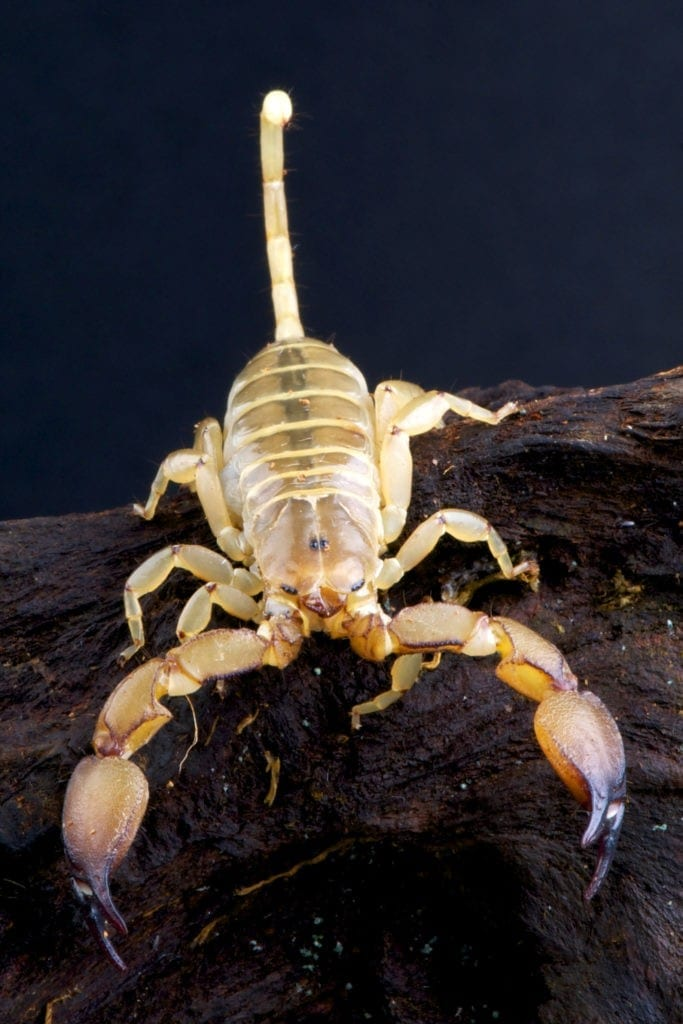 Scorpion Meaning