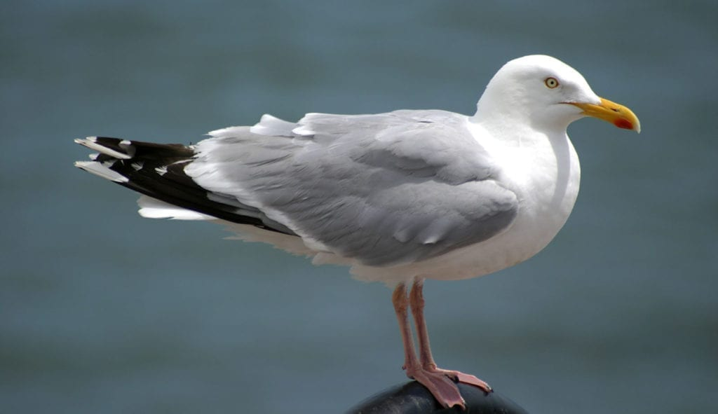 meaning of seagulls