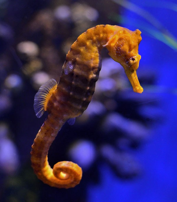 symbolic meaning of the seahorse