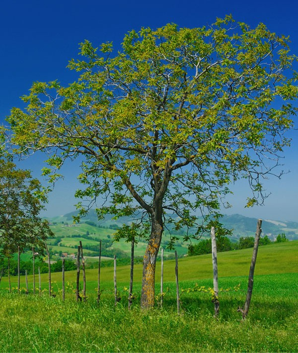 meaning of seasons spring meaning
