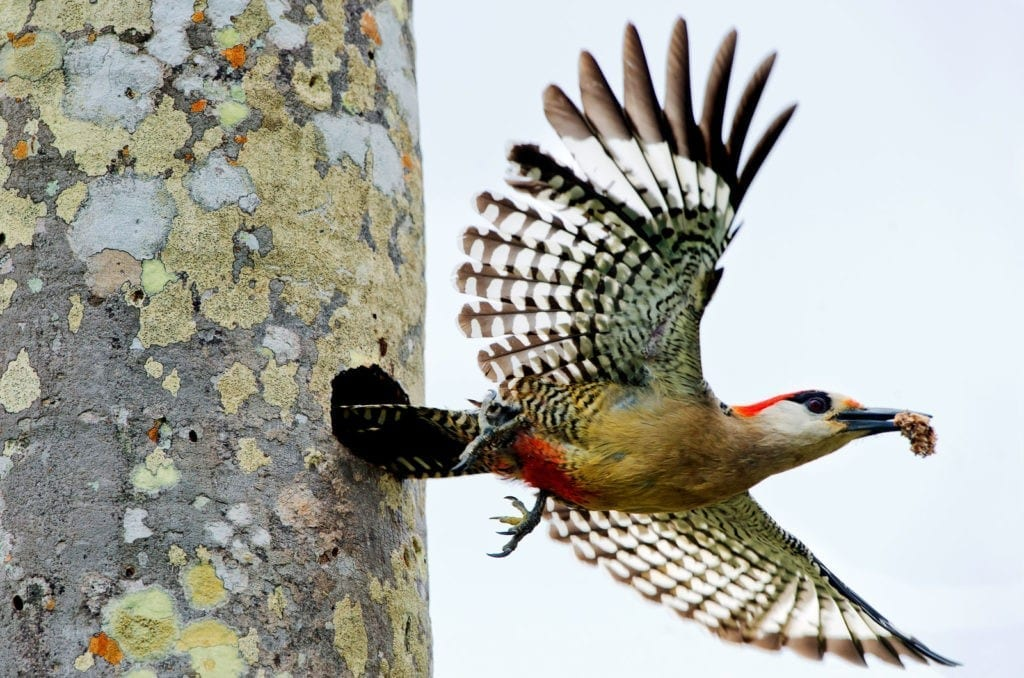 symbolic meaning of the woodpecker