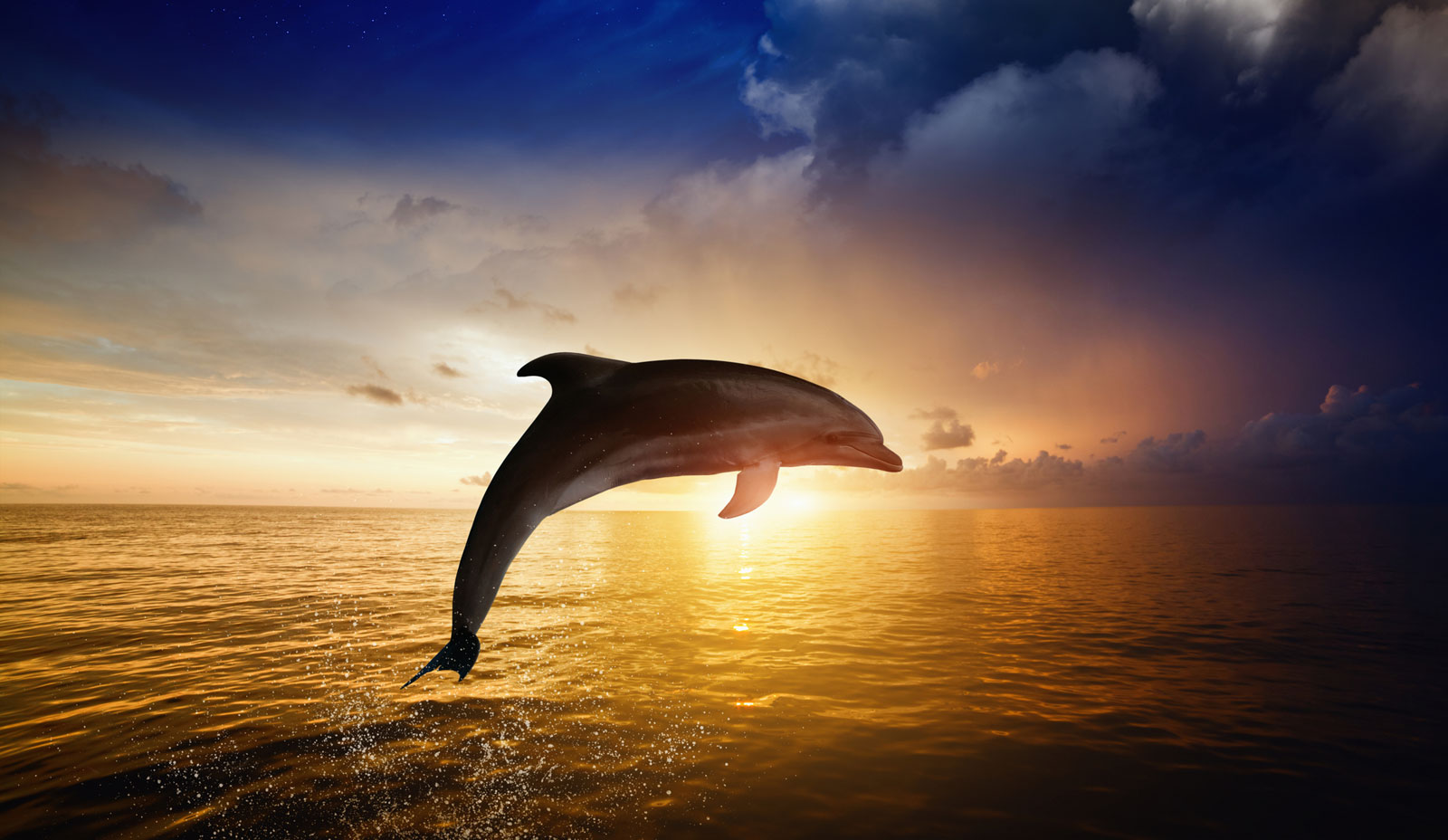 Symbolic Orca Whale Meaning On Whats Your Sign