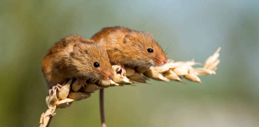 symbolic mouse meanings