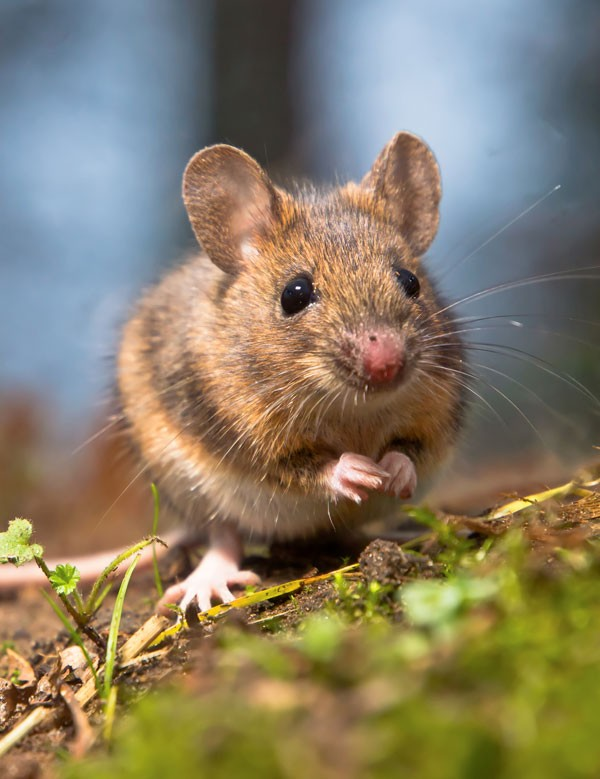 symbolic mouse meaning