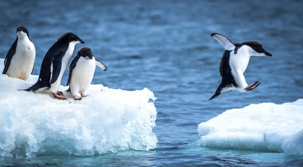penguin facts and penguin meaning