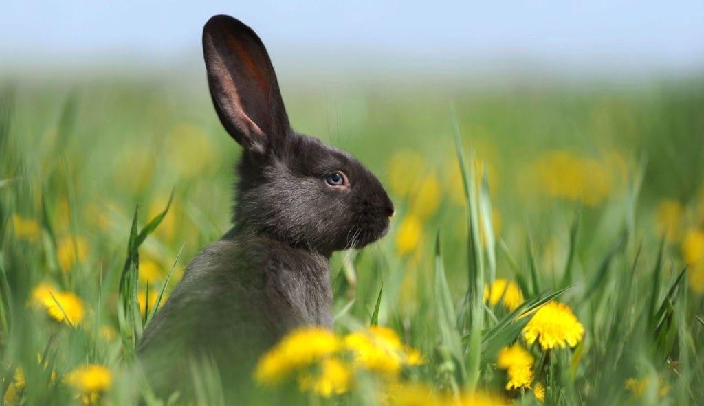 symbolic rabbit meanings