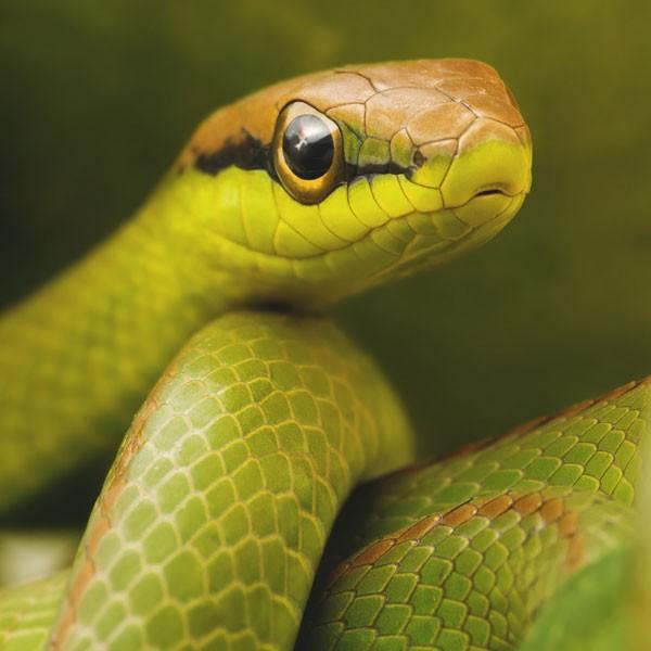 symbols for renewal snake meaning