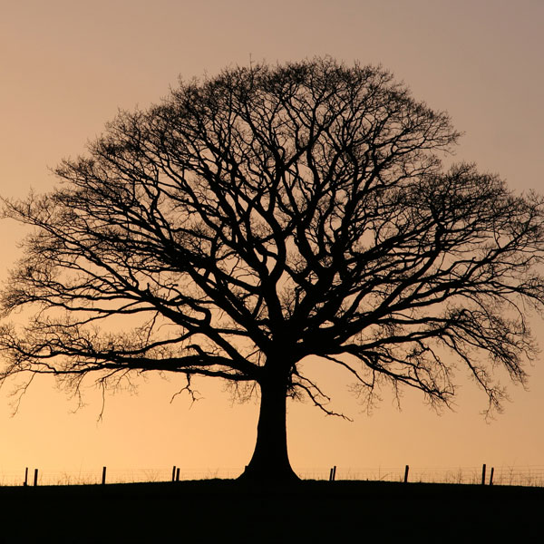 symbols for renewal tree meaning
