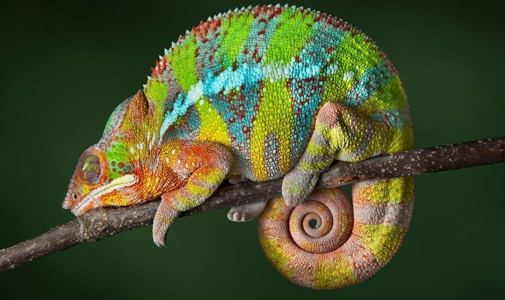 amphibian and reptile totem