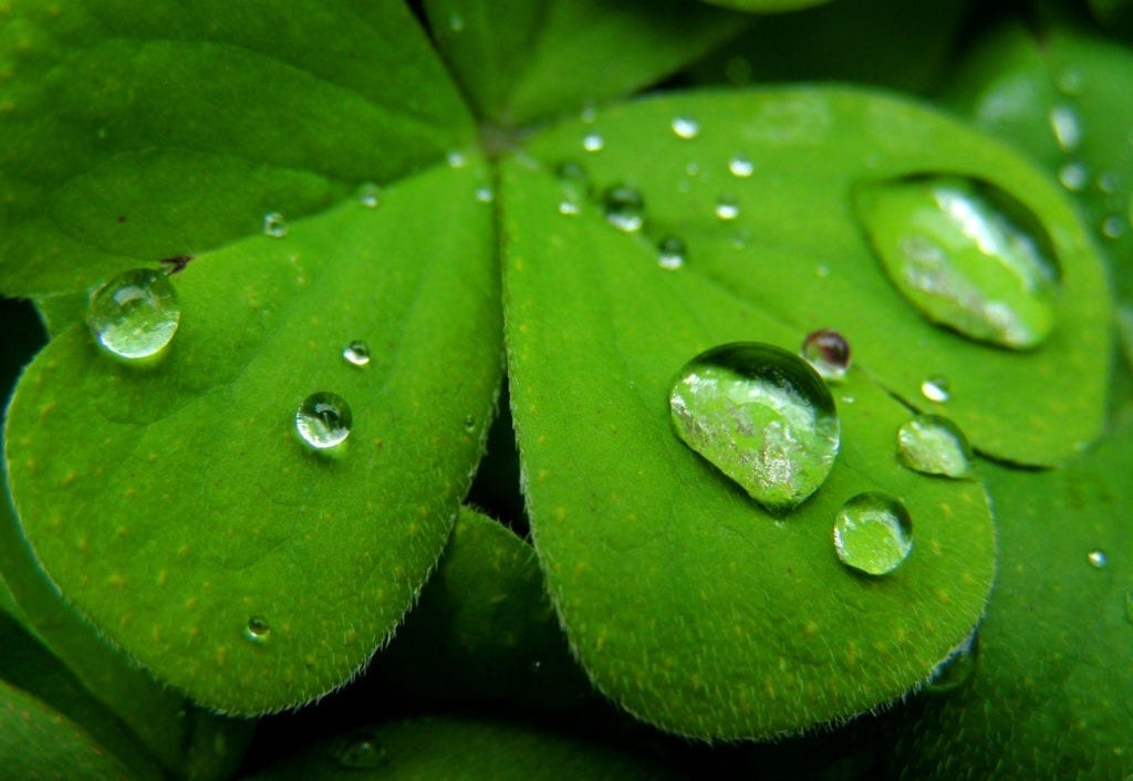 symbolic shamrock meaning and four-leaf clover meaning