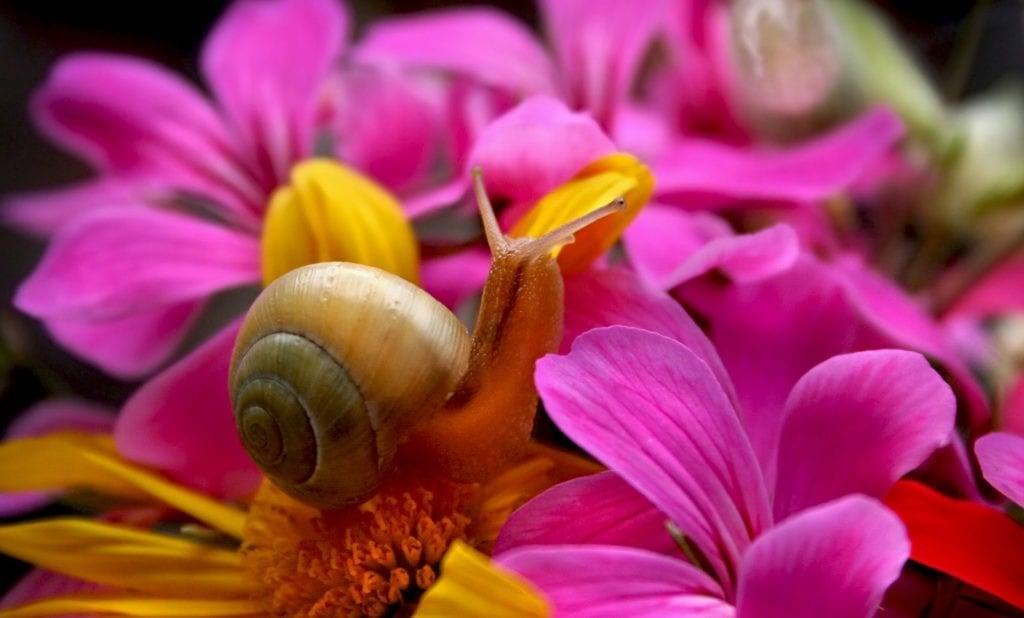 symbolic snail meaning
