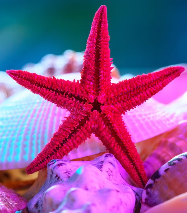 symbolic starfish meaning
