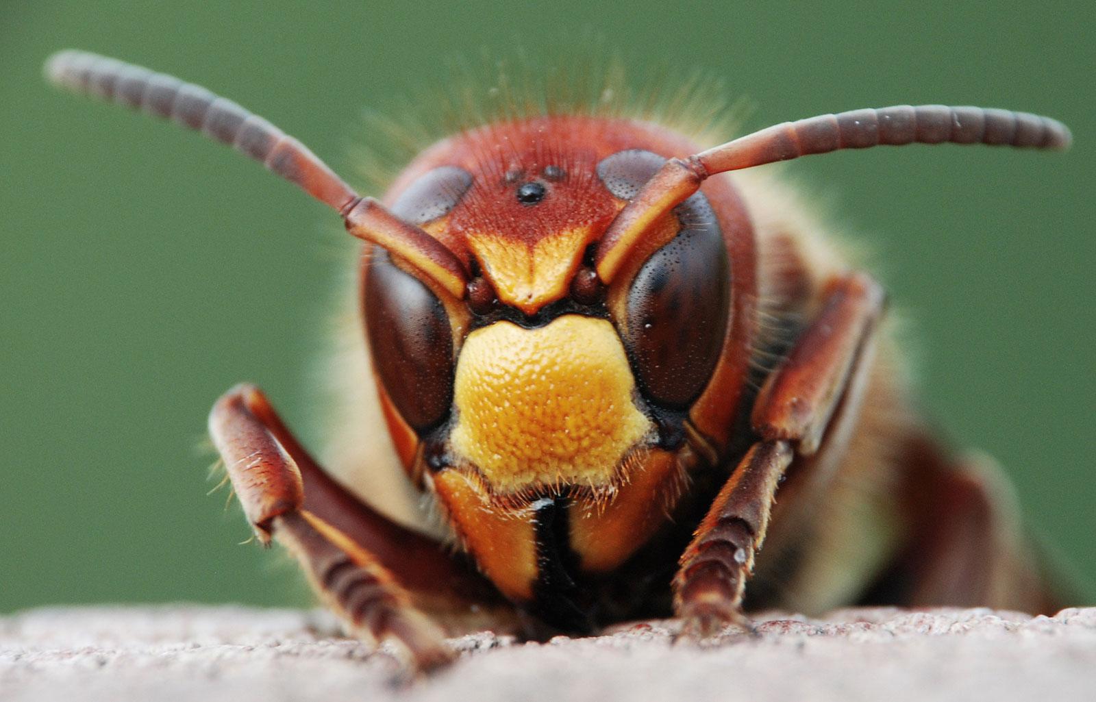 symbolic wasp meaning