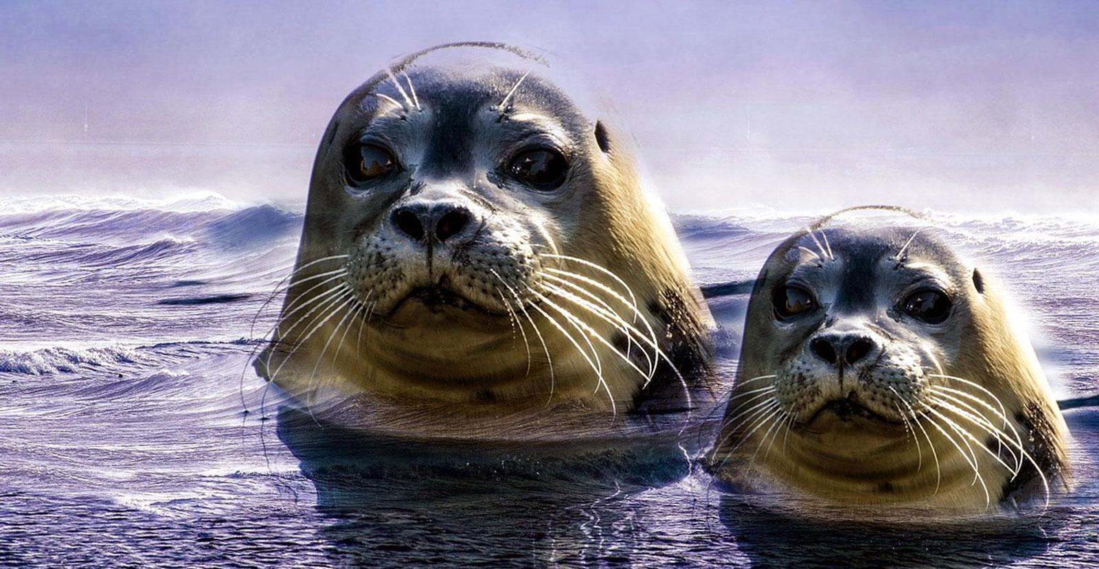 Water Animal Totems