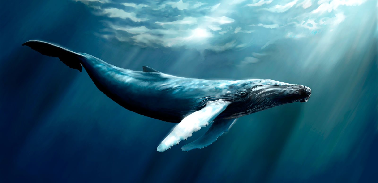 Whale Totem Meaning
