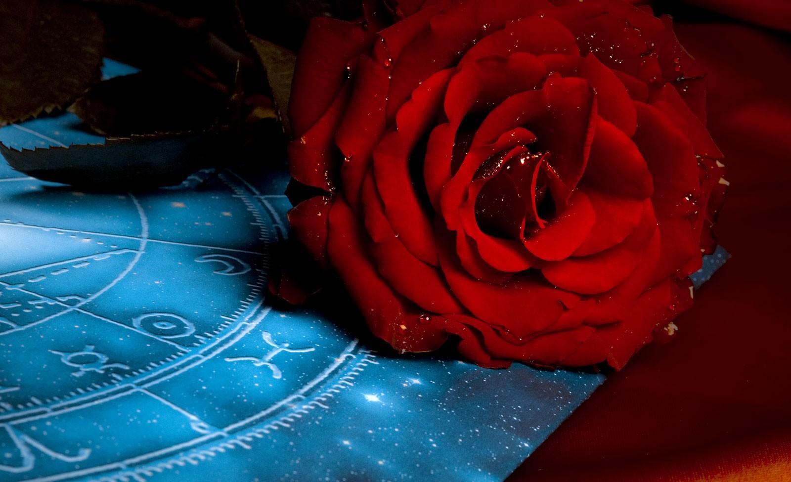 Zodiac Flower Signs