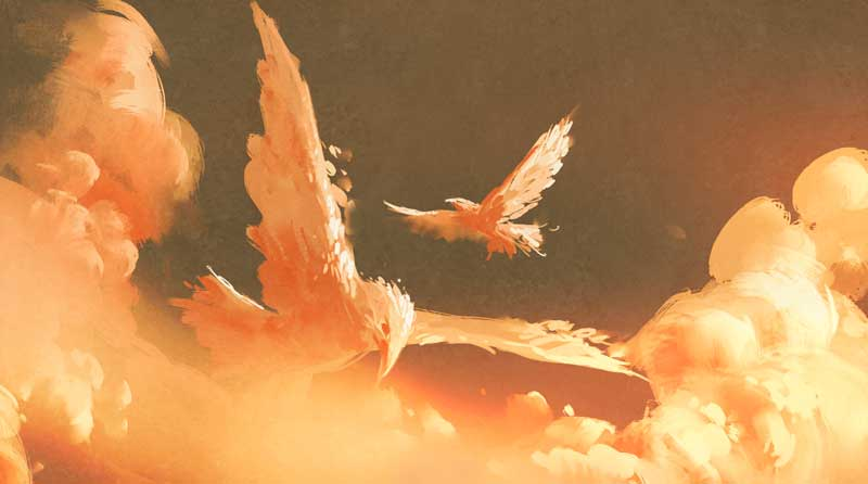 bird dream meanings