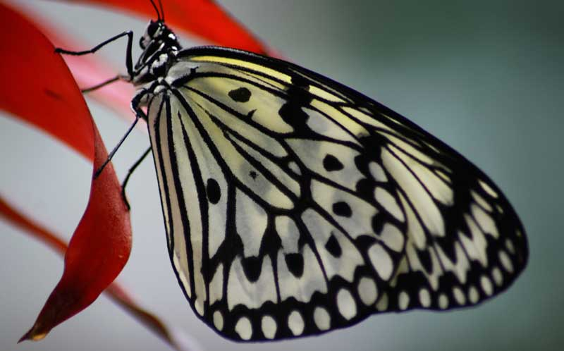 butterfly tattoo ideas butterfly meaning