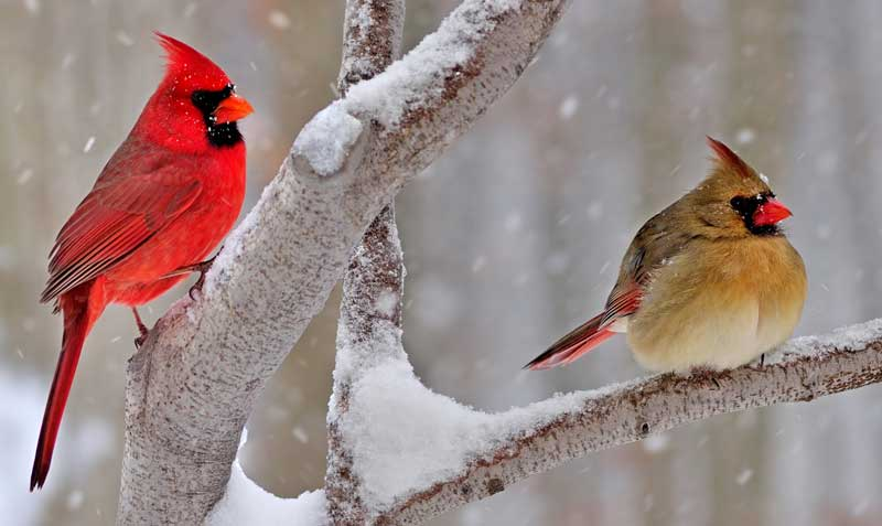 symbolic cardinal meaning