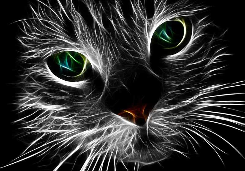 Cat tattoo meaning and cat tattoo ideas