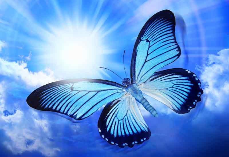 Celtic butterfly sign meaning