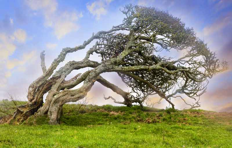 celtic meaning hawthorn tree meaning ogham meaning