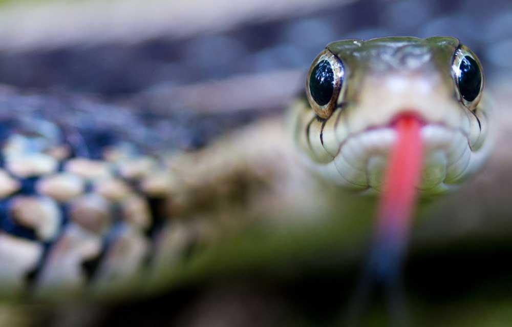 Celtic zodiac sign snake meaning