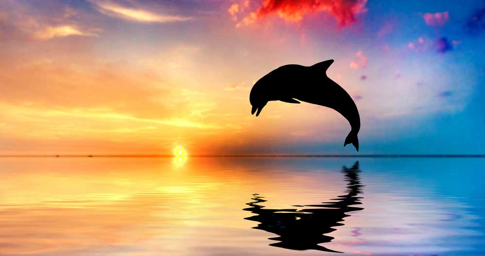 dolphin meaning and dolphin symbolic meaning