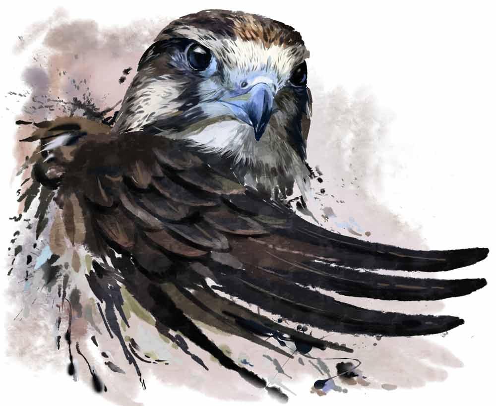 falcon tattoo ideas and falcon meanings